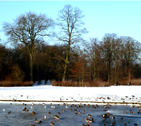 winter landscape birds lake
