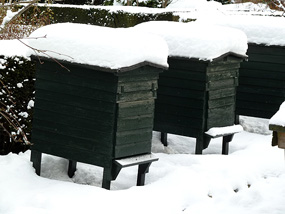 winter pictures snow on beehives