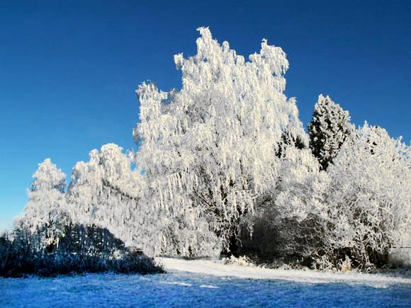 winter-snow-scenes