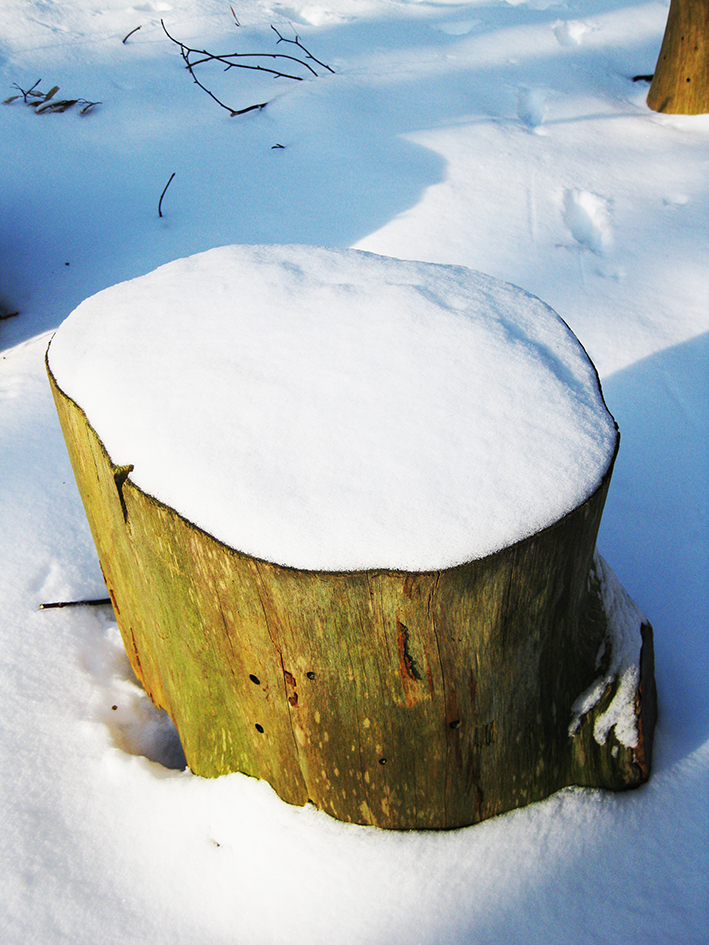 winter pictures stump snow