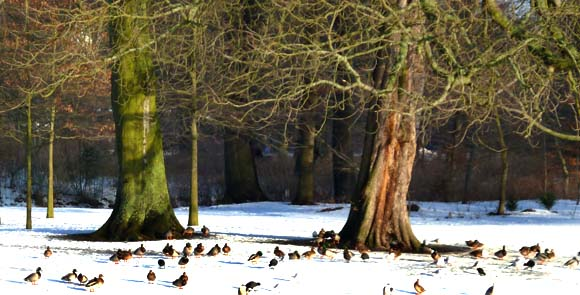 winter landscape with trees and birds