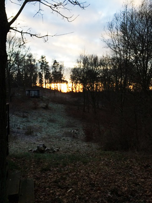 winter scene before the snow