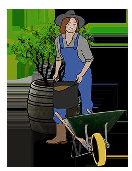 garden wheelbarrow woman gardening