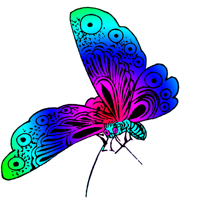 beautiful butterfly strong colors