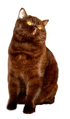 british shorthair cat clip art