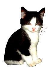 black and white kitten clip art