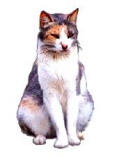 cat clip art sitting cat