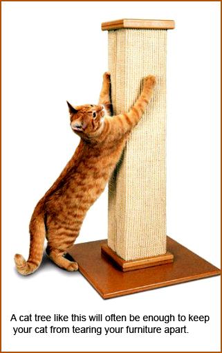 cat tree for good behavior