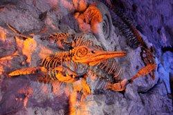 dinosaur fossil prehistoric