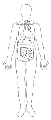 medical clipart lungs heart intestine