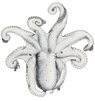 octopus clip art drawing