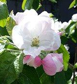 sidebar spring pictures