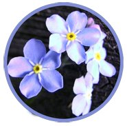 blue flowers spring clipart