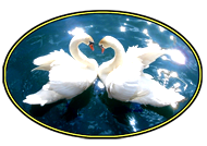 place card swans