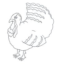 thanksgiving clipart turkey black white drawing