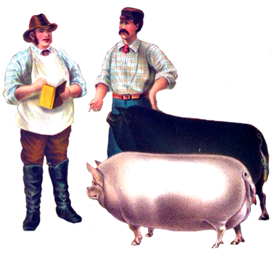 Victorian farmers with pigs