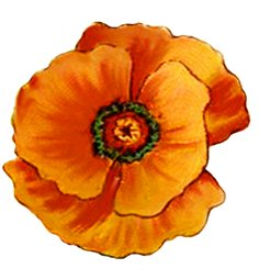 Single red poppy for wedding clipart