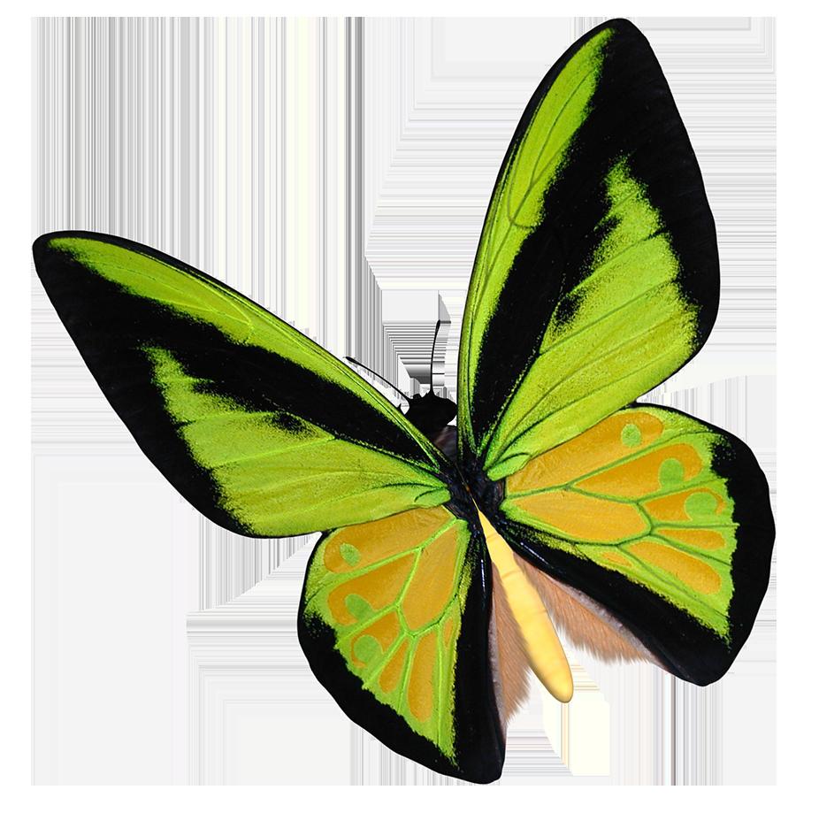 yellow birdwing butterfly clipart