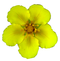 clip art yellow flower