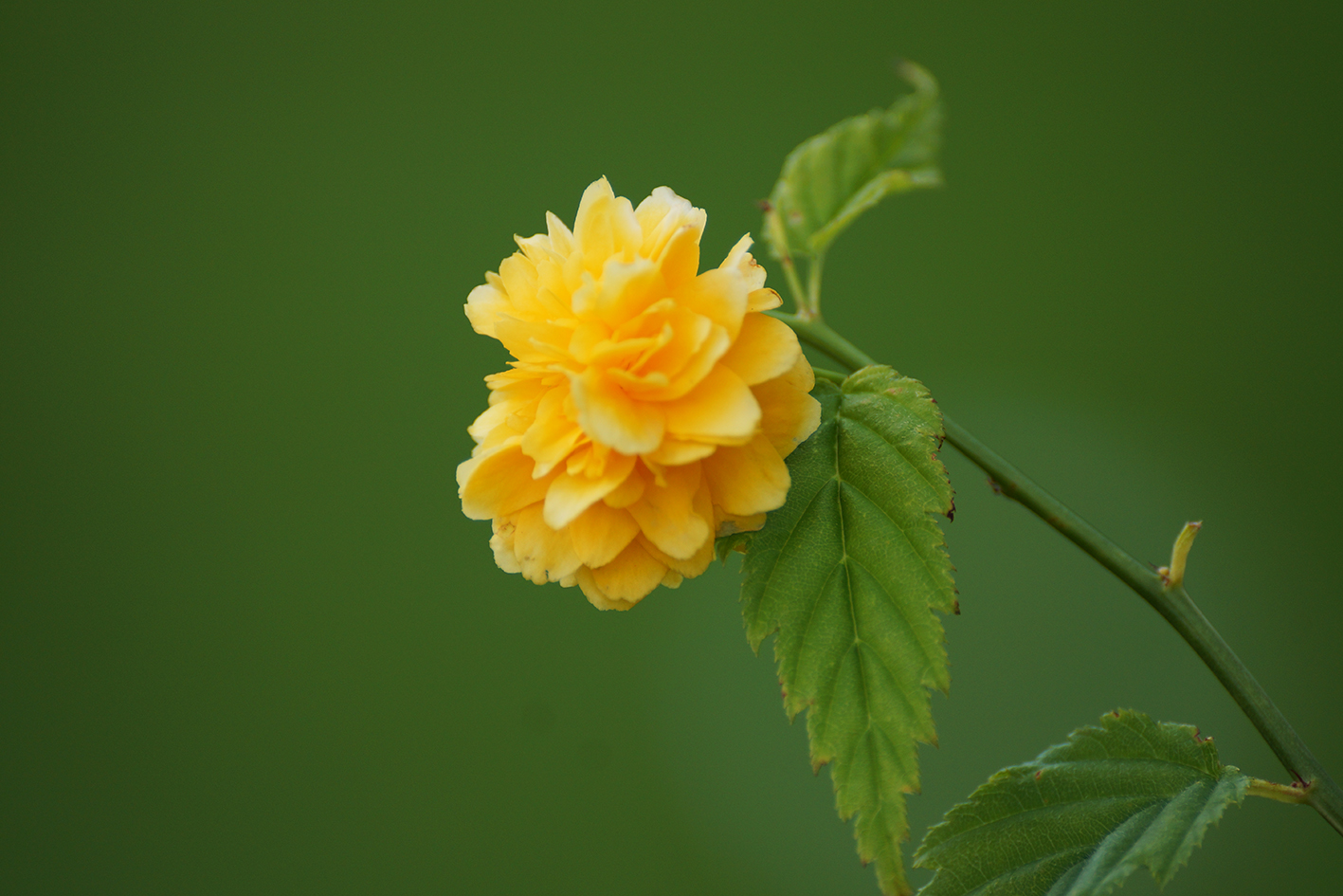 beautiful flower photo yellow flower