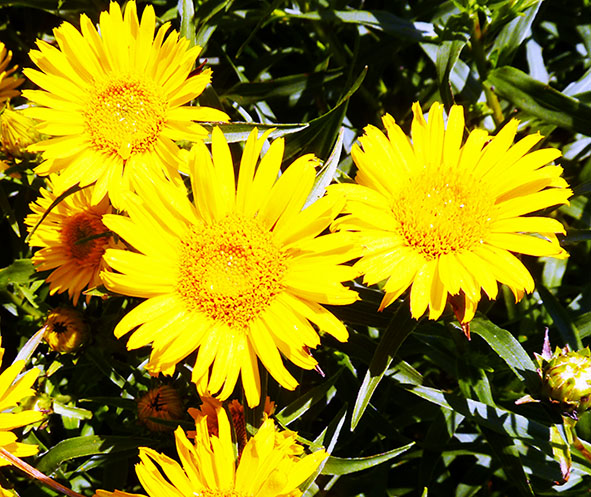 yellow flowers in the sun