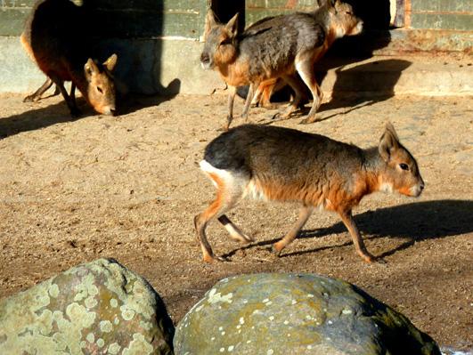 zoo animals mara