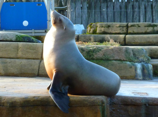 sea lion enjoying the sun light
