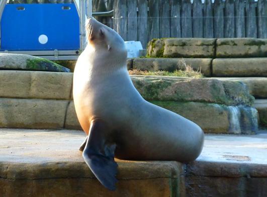 sea lion enjoying the sun light