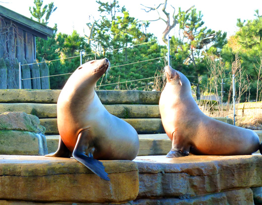 Sea lions sun bathing